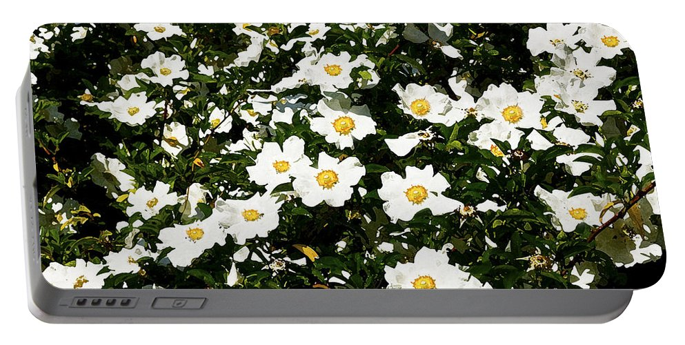 Rose Portable Battery Charger featuring the photograph Glorious White Roses Db by Rich Franco