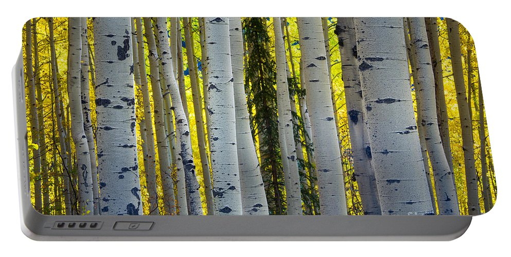 America Portable Battery Charger featuring the photograph Glowing Aspens by Inge Johnsson