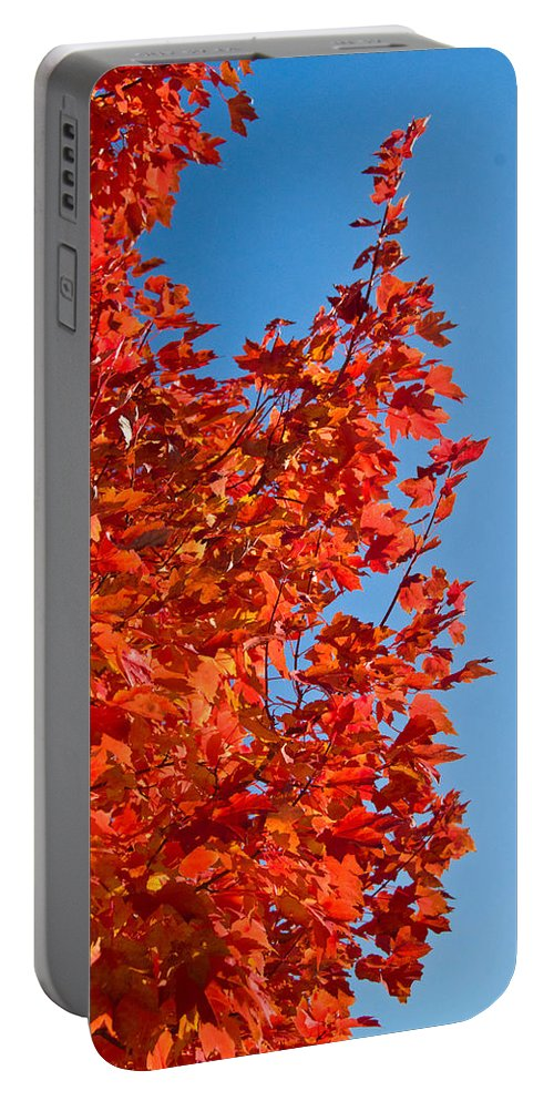 Glowing Portable Battery Charger featuring the photograph Glowing Fall Maple Colors 1 by Douglas Barnett