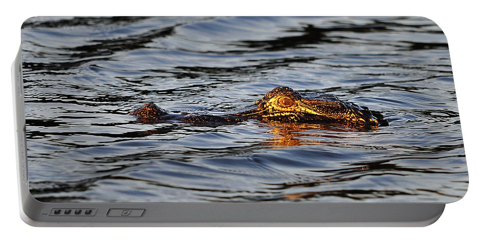 Alligator Portable Battery Charger featuring the photograph Glowing Gator by Al Powell Photography USA