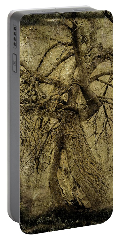 Gnarled Tree Portable Battery Charger featuring the photograph Gnarled And Twisted Tree With Crow by Gothicrow Images