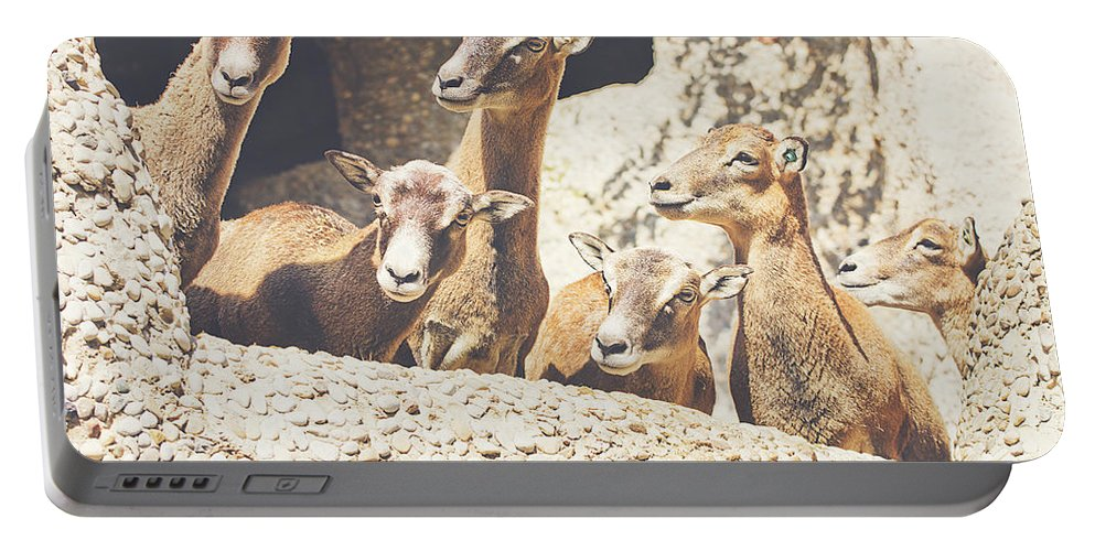 Mammal Portable Battery Charger featuring the photograph Goats On A Rock by Pati Photography