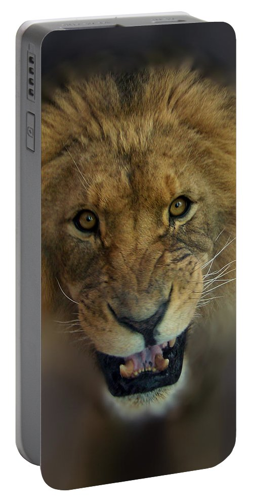 Animals Portable Battery Charger featuring the photograph Going To Get You by Ernie Echols