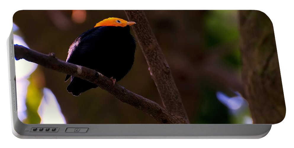 Bird Portable Battery Charger featuring the photograph Golden Crested Mynah by Chris Flees
