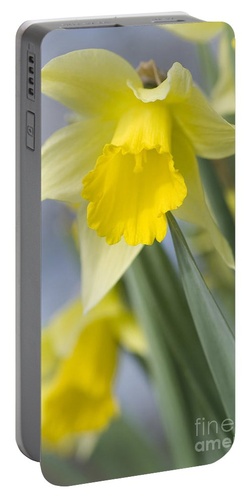 Annegilbert Portable Battery Charger featuring the photograph Golden Daffodils by Anne Gilbert