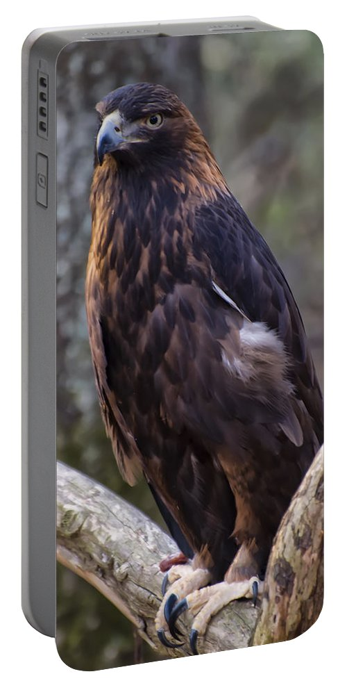 Eagle Pictures Portable Battery Charger featuring the photograph Golden Eagle 2 by Chris Flees