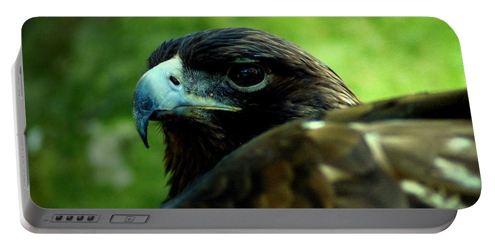 Bird Portable Battery Charger featuring the photograph Golden Eagle by David Weeks