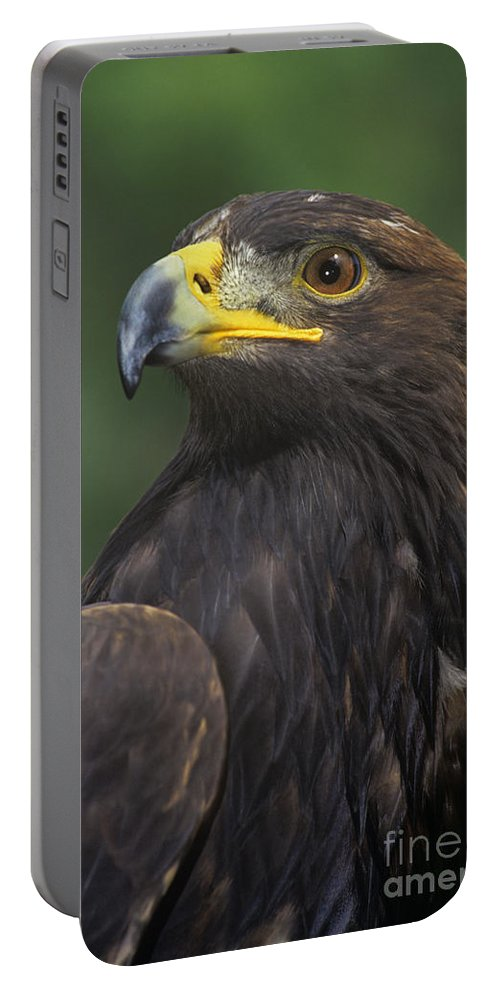 Golden Eagle Portable Battery Charger featuring the photograph Golden Eagle Portrait Threatened Species Wildlife Rescue by Dave Welling