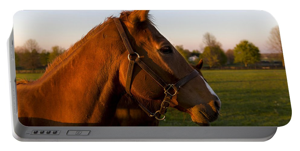 Animal Portable Battery Charger featuring the photograph Golden Light by Jack R Perry