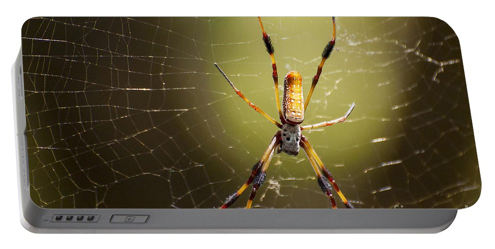 Golden Orb Weaver Spider Spiders Nature Creature Creatures Web Webs Nephila Clavipes Black Bayou Lake National Wildlife Refuge Monroe Louisiana Portable Battery Charger featuring the photograph Golden Orb Weaver by Bob Phillips