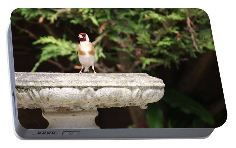 Goldfinch On Birdbath Portable Battery Charger featuring the photograph Goldfinch On Birdbath by Gordon Auld
