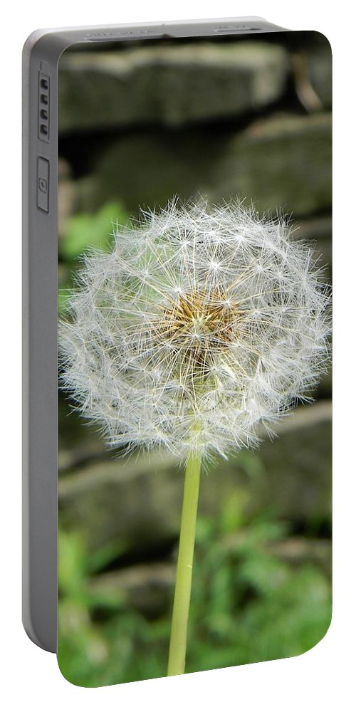 Dandelion Gone To Seed Portable Battery Charger featuring the photograph Gone To Seed by Jean Goodwin Brooks