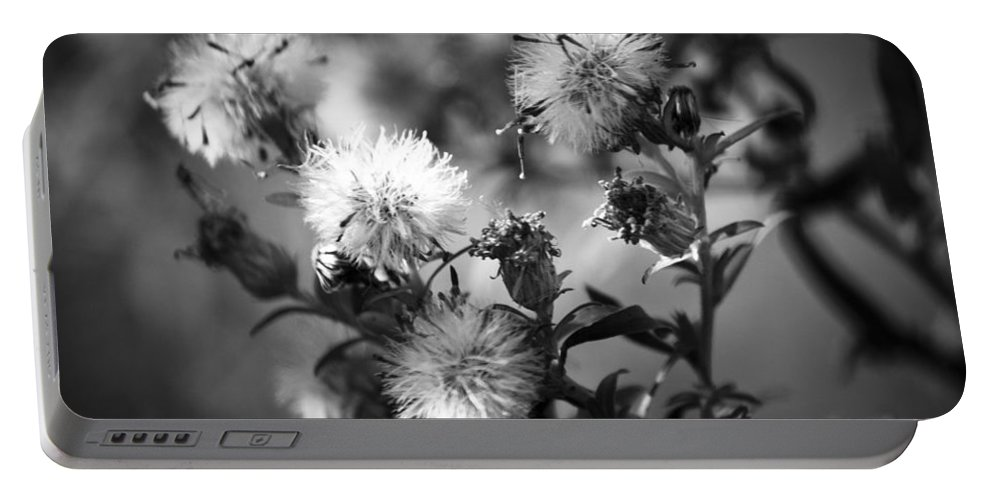 Seed Portable Battery Charger featuring the photograph Gone To Seed Wild Aster by Teresa Mucha