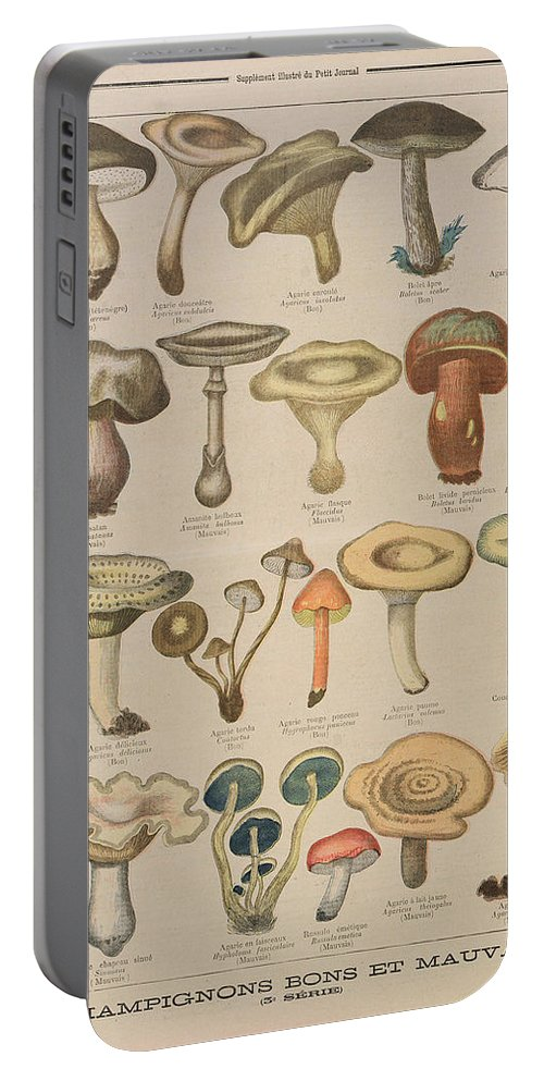Mushroom Portable Battery Charger featuring the drawing Good And Bad Mushrooms by French School