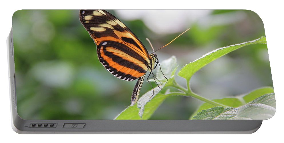 Nature Portable Battery Charger featuring the photograph Good Morning Butterfly by Jackie Mestrom