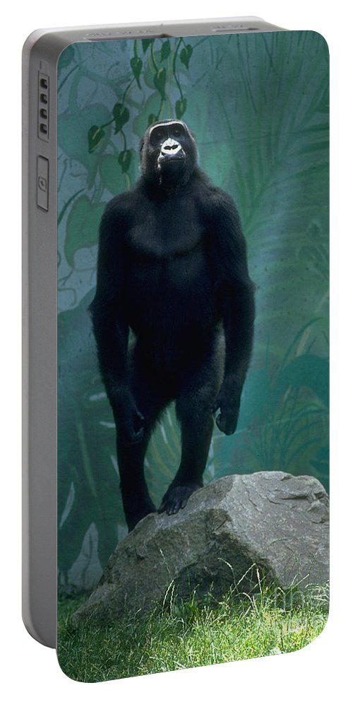 Gorilla Portable Battery Charger featuring the photograph Gorilla Rock by Gary Gingrich Galleries