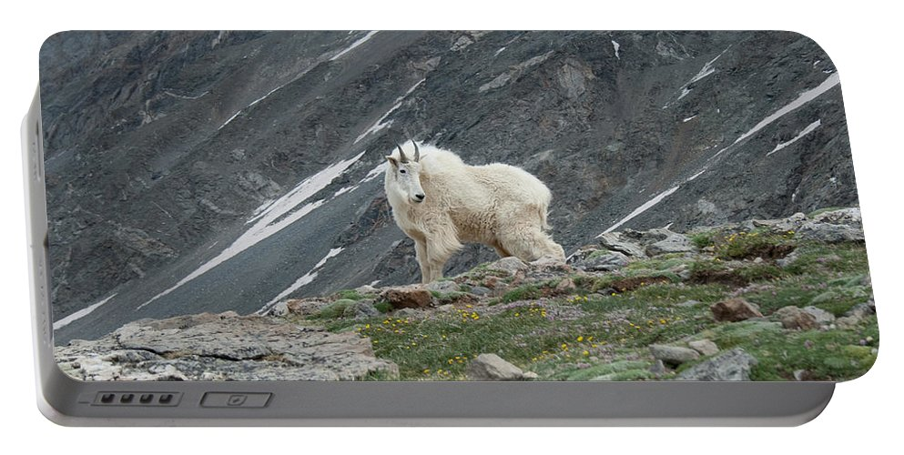 Mountain Goat Portable Battery Charger featuring the photograph Gq Mtn. Goat by Angus Hooper Iii