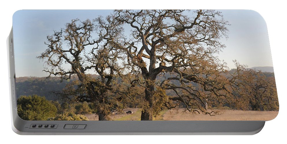 Nature Portable Battery Charger featuring the photograph Grand Oaks by Noa Mohlabane