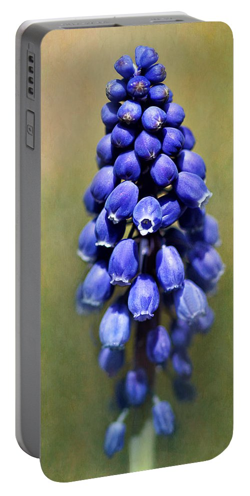 Muscari Portable Battery Charger featuring the photograph Grape Hyacinth by Nikolyn McDonald