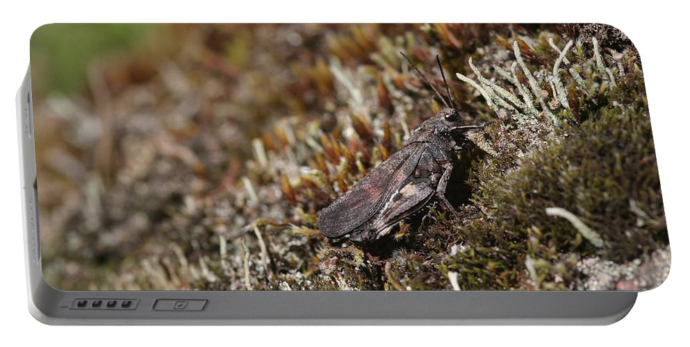 Grasshopper Portable Battery Charger featuring the photograph Grasshopper by Dreamland Media