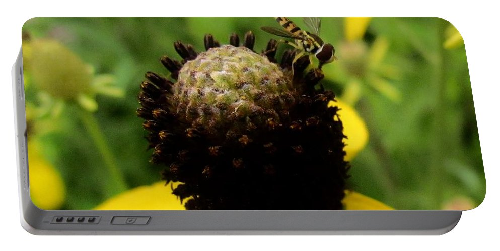 Yellow Gray Cone Flower Portable Battery Charger featuring the photograph Gray Cone Flower by Eric Noa