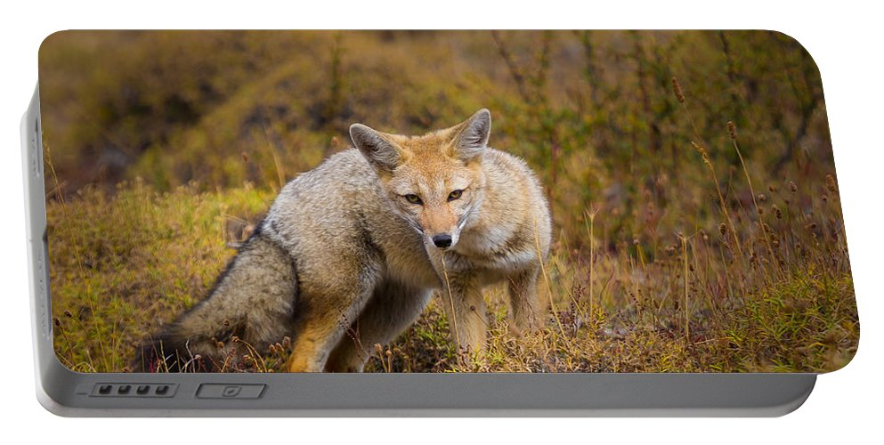 America Portable Battery Charger featuring the photograph Zorro by Inge Johnsson