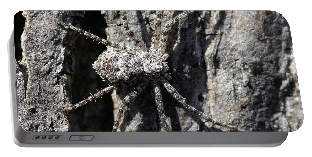 Spider Portable Battery Charger featuring the photograph Gray On Gray by Doris Potter