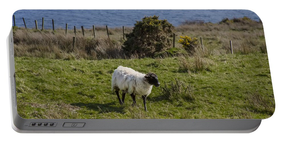 Grazing Portable Battery Charger featuring the photograph Grazing By The Sea by Bill Cannon