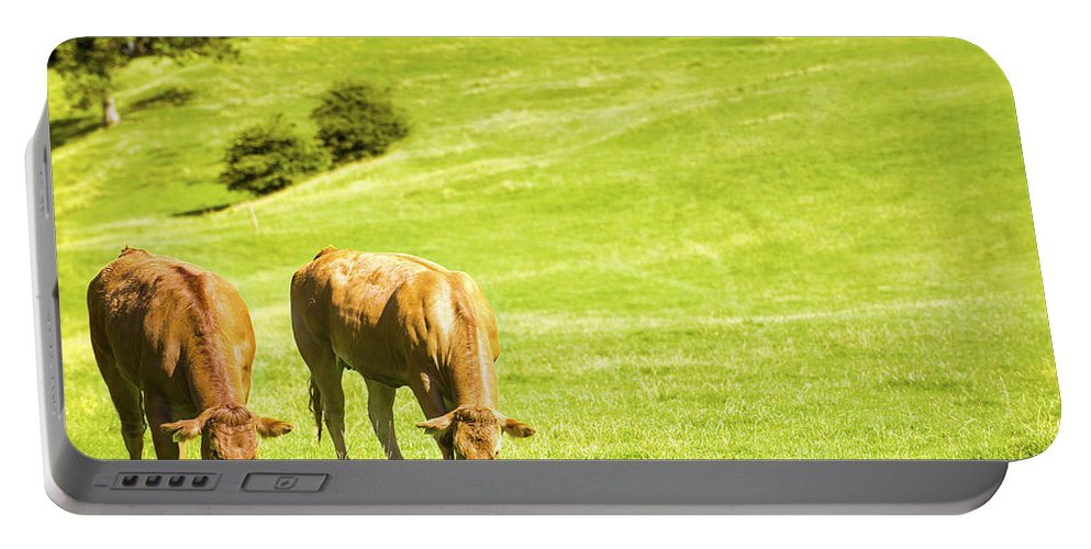 Grazing Portable Battery Charger featuring the photograph Grazing Cows by Amanda Elwell