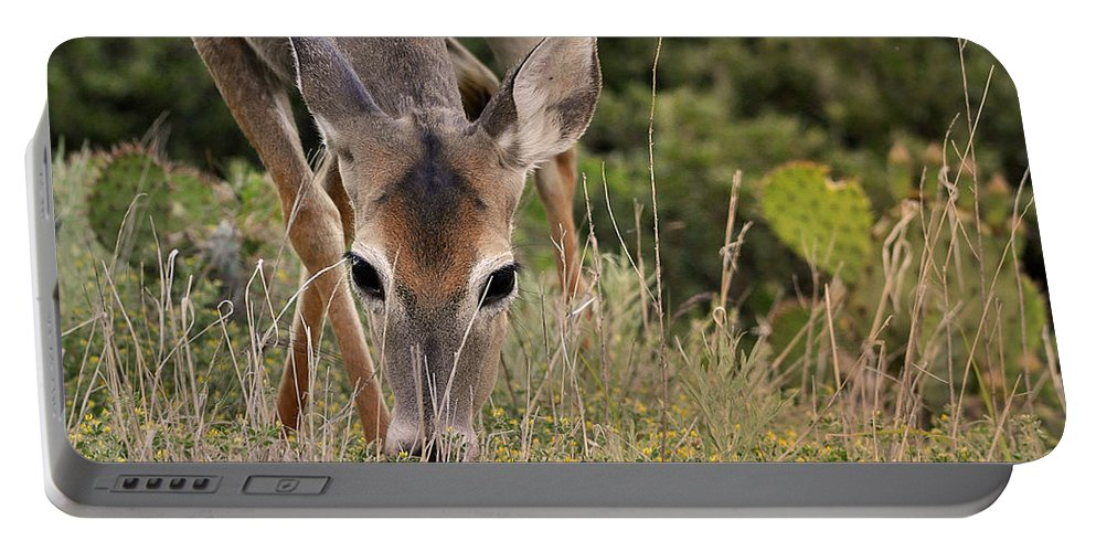 Nature Portable Battery Charger featuring the photograph Grazing Oklahoma by Nava Thompson