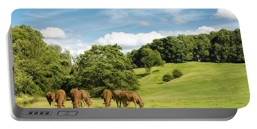 Grazing Portable Battery Charger featuring the photograph Grazing Summer Cows by Amanda Elwell