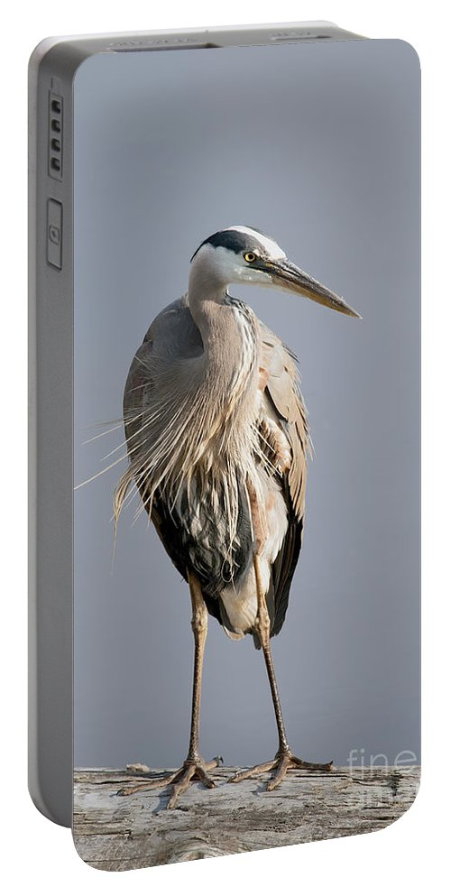 Great Blue Heron Portable Battery Charger featuring the photograph Great Blue Heron 2 by Sharon Talson