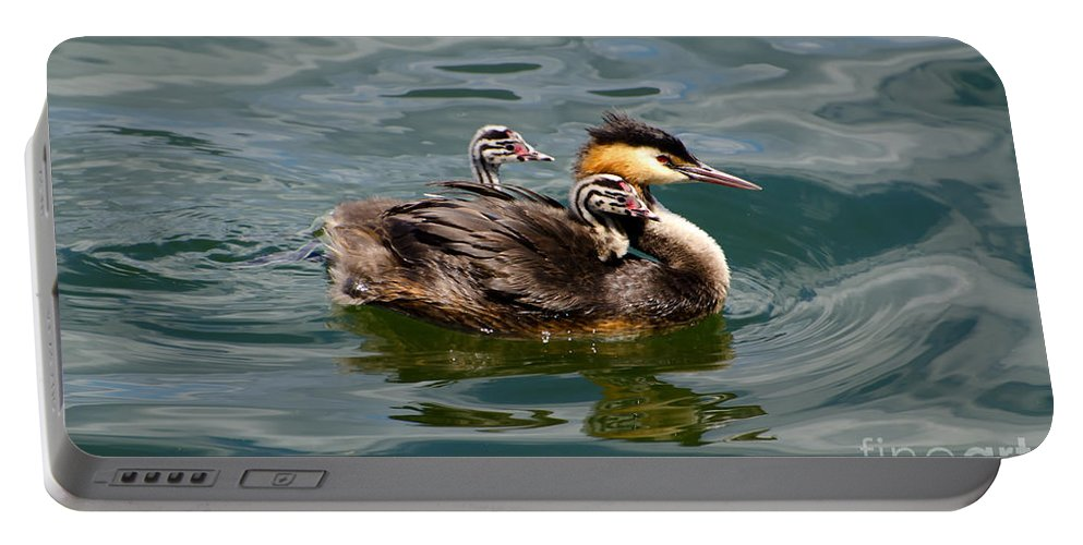 Great Crested Grebe Portable Battery Charger featuring the photograph Great Crested Grebe by Mats Silvan
