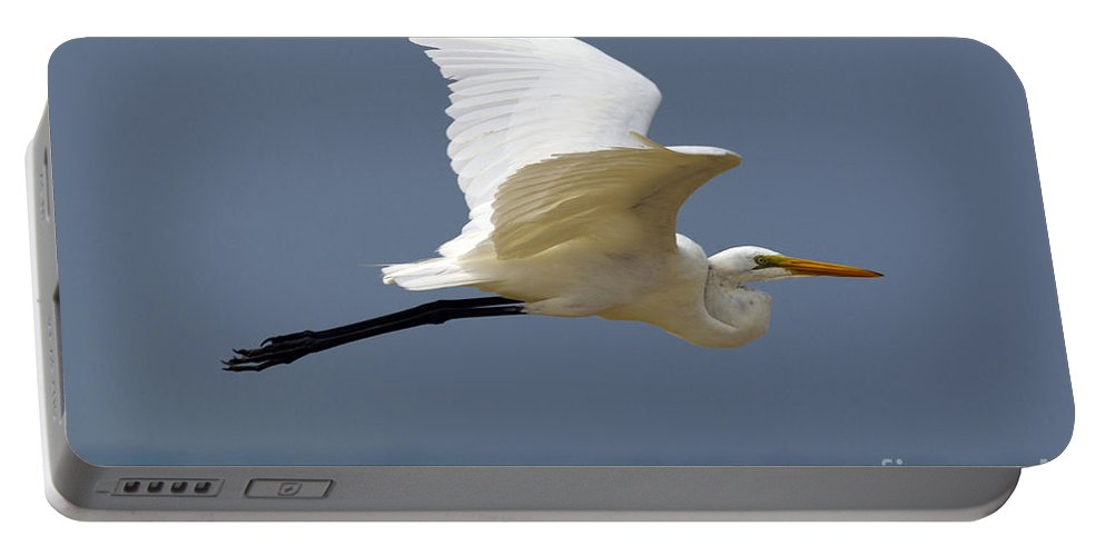 Great Egret Portable Battery Charger featuring the photograph Great Egret Galapagos by Jason O Watson