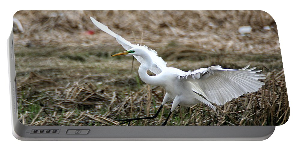 Wildlife Portable Battery Charger featuring the photograph Great Egret Landing by William Selander
