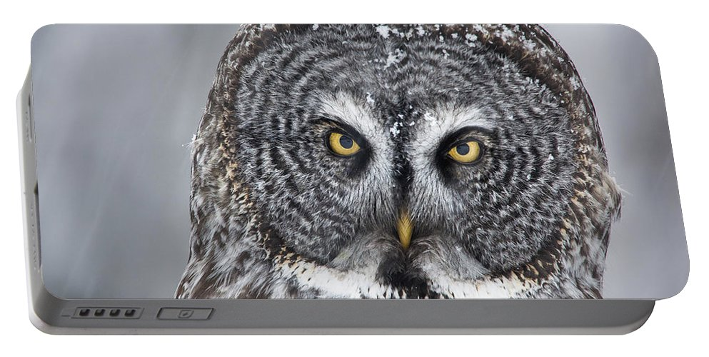 Nis Portable Battery Charger featuring the photograph Great Gray Owl Scowl Minnesota by Benjamin Olson