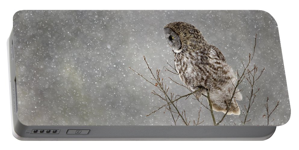 Great Grey Owl Portable Battery Charger featuring the photograph Great Grey Hunter by Dee Cresswell
