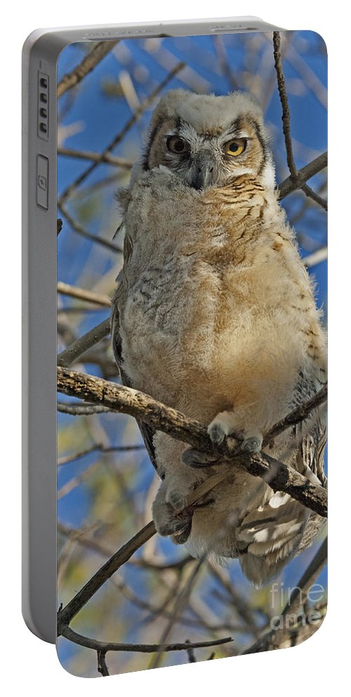 Bird Portable Battery Charger featuring the photograph Great Horned Owl 2 by Bob Christopher