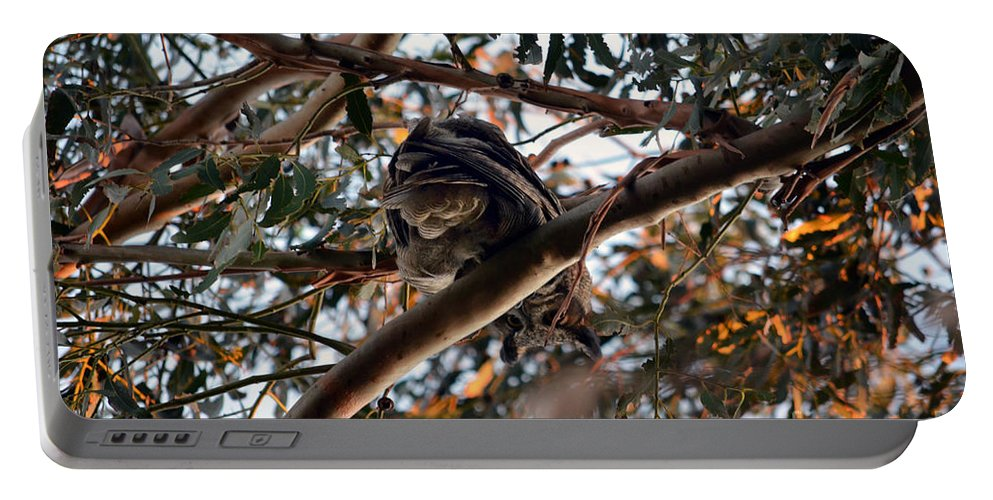 Great Horned Owl Portable Battery Charger featuring the photograph Great Horned Owl Looking Down by Afroditi Katsikis