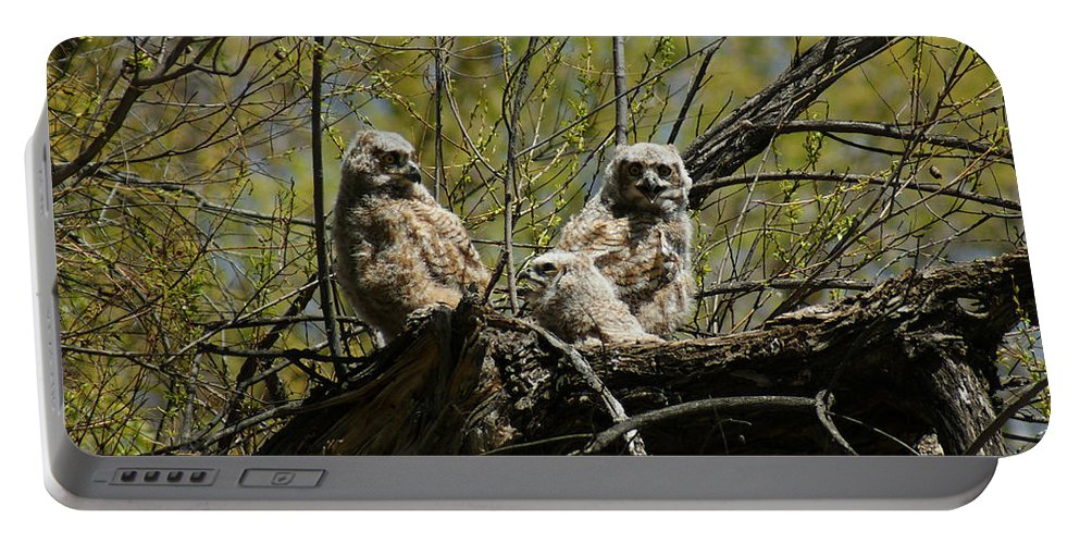 Birds Portable Battery Charger featuring the photograph Great Horned Owlets 1 by Ernie Echols