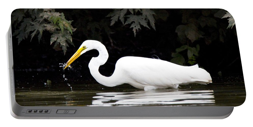 Great Blue Heron Photographs Portable Battery Charger featuring the photograph Great White Egret Eating Fish 2 by Vernis Maxwell