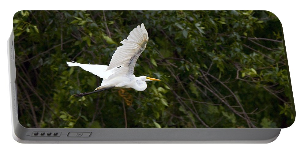 Great Blue Heron Photographs Portable Battery Charger featuring the photograph Great White Egret Flying 1 by Vernis Maxwell