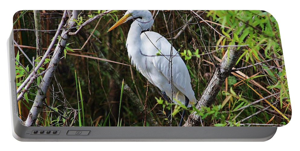 Great Portable Battery Charger featuring the photograph Great White Egret In The Wild by Chuck Hicks
