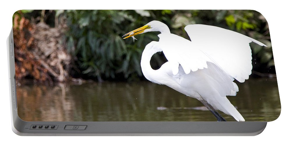 Great Blue Heron Photographs Portable Battery Charger featuring the photograph Great White Egret Show Off by Vernis Maxwell