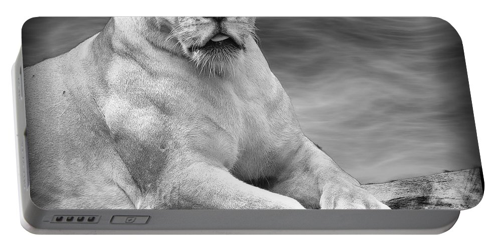 Lioness Portable Battery Charger featuring the photograph Green Eyes by Ben Yassa
