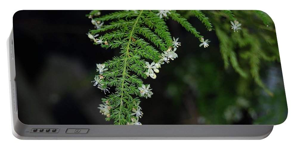 Rare Seen Blooms Portable Battery Charger featuring the photograph Green Fern by Robert Floyd
