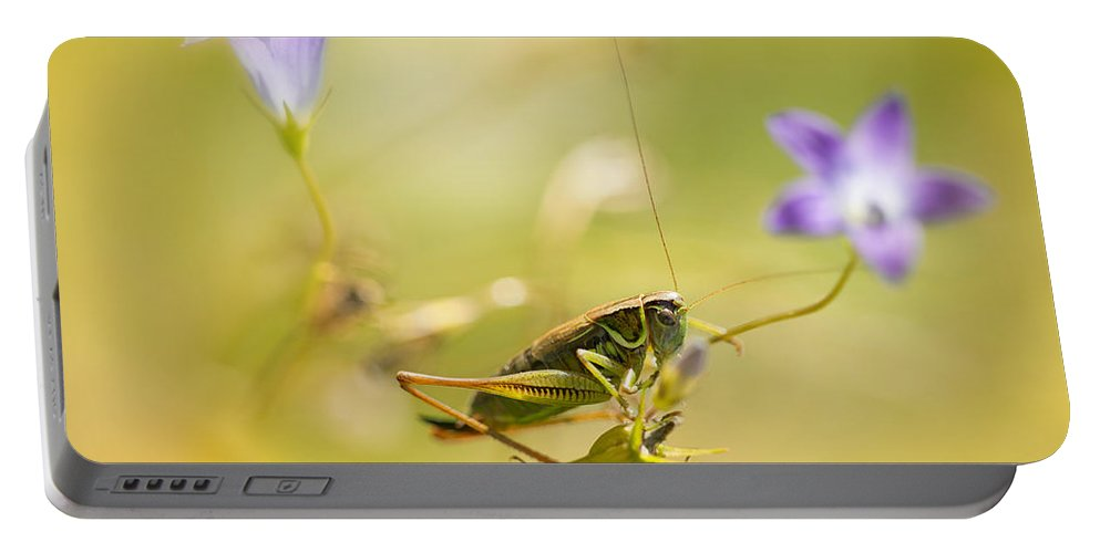 Macro Portable Battery Charger featuring the photograph Green Grasshopper On Violet Bell Flowers by Jaroslaw Blaminsky