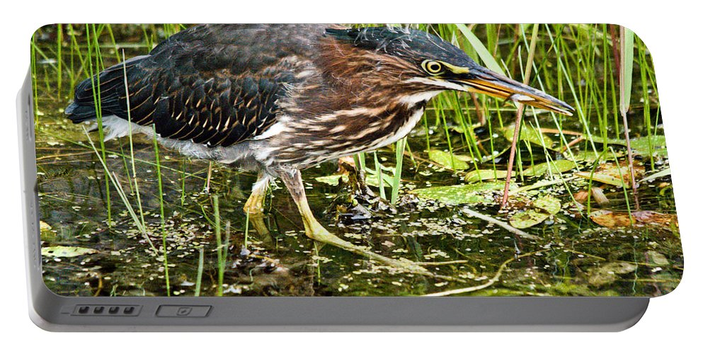 Green Heron Portable Battery Charger featuring the photograph Green Heron And Catch by Cheryl Baxter