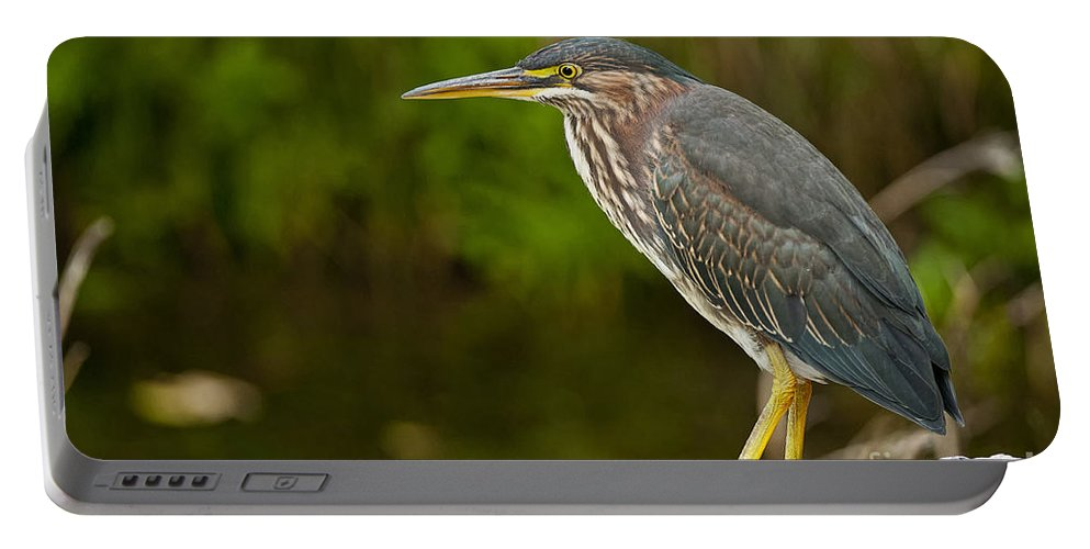 Green Heron Portable Battery Charger featuring the photograph Green Heron Pictures 378 by World Wildlife Photography