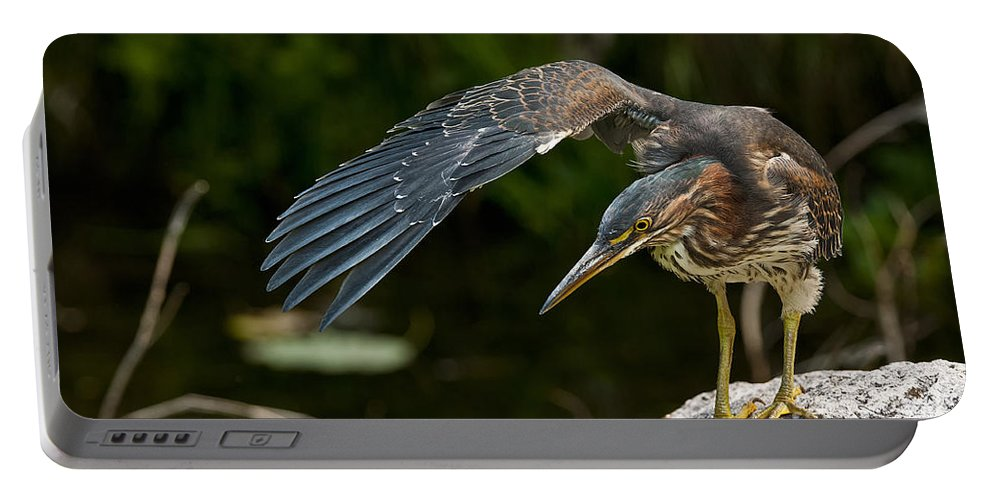 Green Heron Portable Battery Charger featuring the photograph Green Heron Pictures 386 by World Wildlife Photography